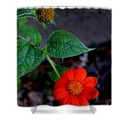 Mexican Sunflower 2 Shower Curtain