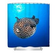 Mexico Guineafowl Puffer Shower Curtain