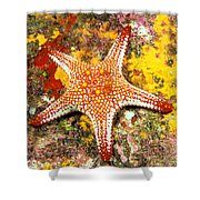 Mexico, Gulf Sea Star Shower Curtain