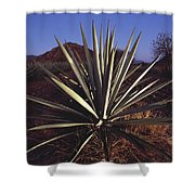 Mexico, Oaxaca, Field Of Agave Plants Shower Curtain