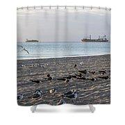 Miami Beach Flock Of Birds Sunrise Shower Curtain