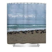 Miami Beach Flock Of Birds Shower Curtain