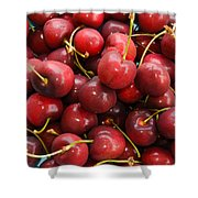 Michigan Cherries Shower Curtain