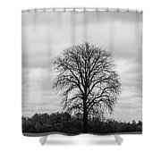 Michigan Lonley Tree  Shower Curtain