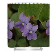 Michigan Purple Spring Flowers Shower Curtain