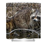 Michigan Raccoon Shower Curtain