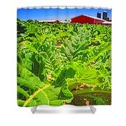 Michigan Surgar Beet Farming Shower Curtain