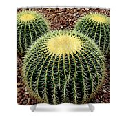 Mickey Mouse Barrel Cactus Shower Curtain