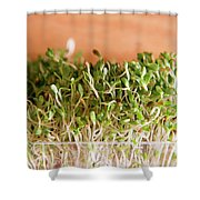 Micro Green Shower Curtain