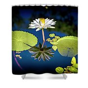 Mid Day Water Lily Reflection Shower Curtain