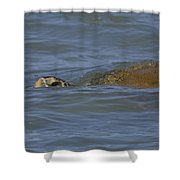 Midday Swim Shower Curtain