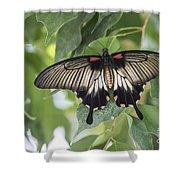 Midland Moth Shower Curtain