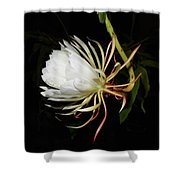 Midnight Arrival Shower Curtain