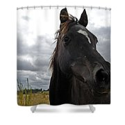 Midnight Melody Shower Curtain