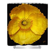 Midnight Poppy Shower Curtain
