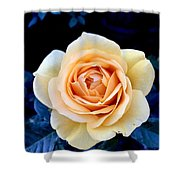 Midnight Rose Shower Curtain