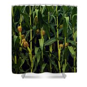 Midwest Silk Shower Curtain