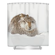 Miffed Mountain Hare Shower Curtain