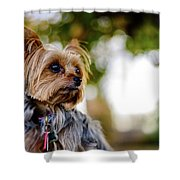 Mighty Dog Shower Curtain