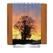 Mighty Oak At Sunset Shower Curtain