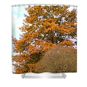 Mighty Oak In Autumn Shower Curtain