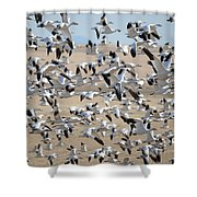 Migrating Snow Geese Shower Curtain