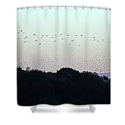 Migration Flyway Shower Curtain