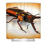 Military Stag Beetle Shower Curtain