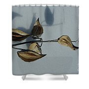Milk Weed Pods In Snow Shower Curtain