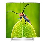 Milkweed Beetle Shower Curtain