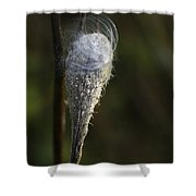 Milkweed In Autumn Shower Curtain