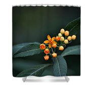 Milkweed Shower Curtain