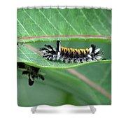 Milkweed Tussock Moth Caterpillar Shower Curtain