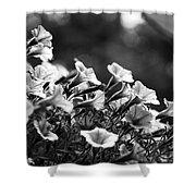 Mill Hill Inn Petunias Black And White Shower Curtain