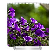 Mill Hill Inn Petunias Shower Curtain