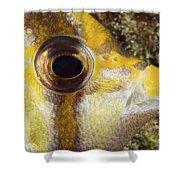 Milletseed Butterflyfish Shower Curtain