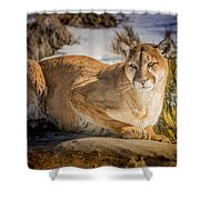 Milo At The Ark Shower Curtain