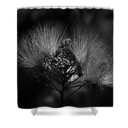 Mimosa Flowers Shower Curtain