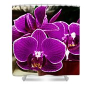 Mini Orchids Shower Curtain