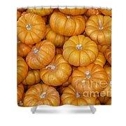 Mini Pumpkins Card Shower Curtain