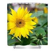 Mini Sunflower And Bud Shower Curtain
