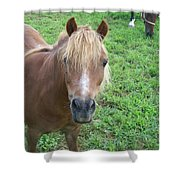 Miniature Horse Shower Curtain