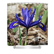 Miniature Iris Shower Curtain