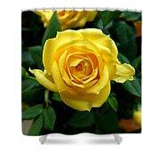 Miniature Yellow Rose Shower Curtain
