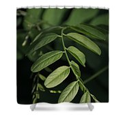 Golden Ratio In Nature Shower Curtain