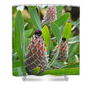 Mink Protea Flower Shower Curtain