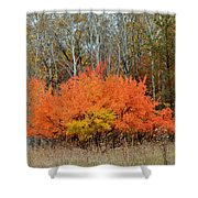Minnesota Autumn 57 Shower Curtain