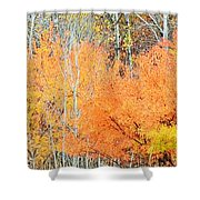 Minnesota Autumn 58 Shower Curtain