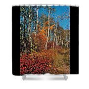 Minnesota  Autumn Path Shower Curtain