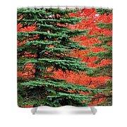 Minnesota Autumn Spruce Maple Shower Curtain